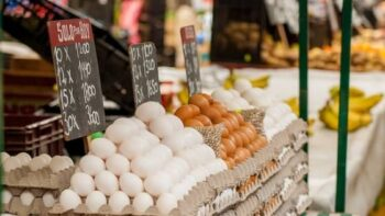 egg business plan in hindi